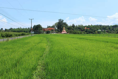 Chiangmai ,Thailand-Septeber 19 ,2012 :Mae Ann Temple in Maerim , Chiangmai
