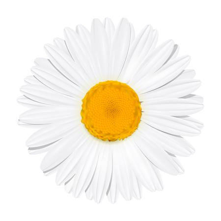 Daisy flower. Chamomile. Summer concept. Vector Illustration