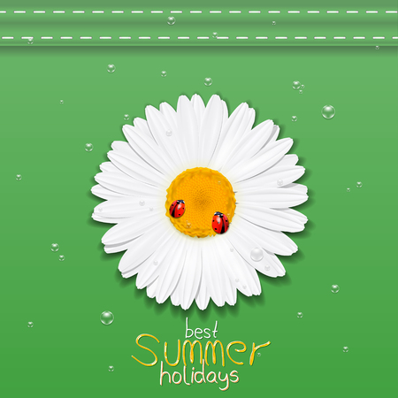 Daisy flower. Chamomile. Best Summer holidays. Vector Illustration