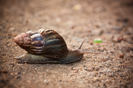 Moving at a snail s pace