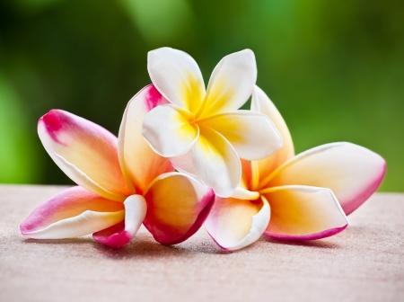 Beautiful magnolia flowers isolated on white background  Stock Photo