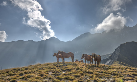 aiguille: A group of horses in a meadow in front of the Aiguille d