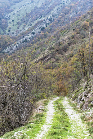 np: Dirt road in the woods, Monte Cucco NP, Appennines, Umbria, Italy