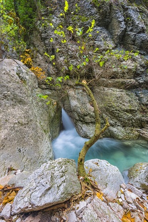np: Tree on the ridge with waterfall on the back, Monte Cucco NP, Appennines, Umbria, Italy