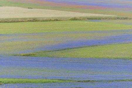 np: Colored fields in Piano Grande, Monti Sibillini NP, Umbria, Italy