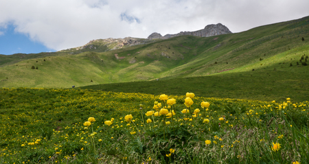 radiated: Picturesque landscape of green hills with small yellow flowers on foreground and rocky mountain and white cloud on background