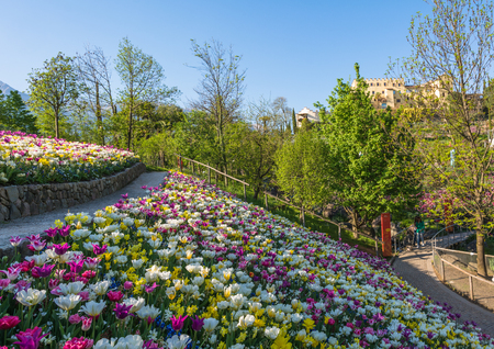 plants species: The Botanic Gardens of Trauttmansdorff Castle, Merano, south tyrol, Italy, offer many attractions with botanical species and varieties of plants from all over the world. Archivio Fotografico