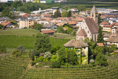 wine road: Characteristic circular vineyard in the South Tyrol, Egna, Bolzano, Italy on the wine road. Vine growing and wine production. Editorial
