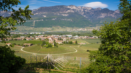 Characteristic circular vineyard in the South Tyrol, Egna, Bolzano, Italy on the wine road. Vine growing and wine production. Stock Photo