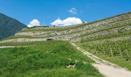 the Novacella vineyards in spring, Bolzano, Italy