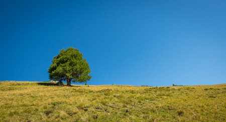 Mountain meadow with a lone tree and a blue sky on a summer day Stock Photo