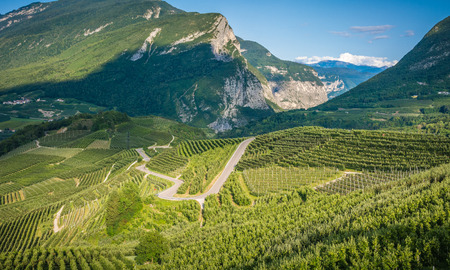 View down the idyllic vineyards and fruit orchards of Trentino Alto Adige, Italy. Val di Non, a vast fruit orchard in the heart of north - western Trentino, Italy