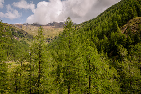 mountain landscape. Summer view of the Rabbi Valley, Trentino Alto Adige, northern italy