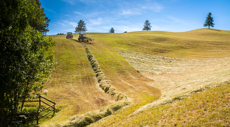 Haymaking on a hillside with rows of hay, a hay tedder and a hay-loader