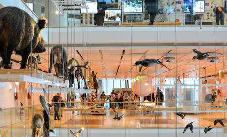 TRENTO, Italy, january 2016: The taxidermized animals in the pemanent exhibition of the famous Science Museum of Trento, Trentino Alto Adige, Italy