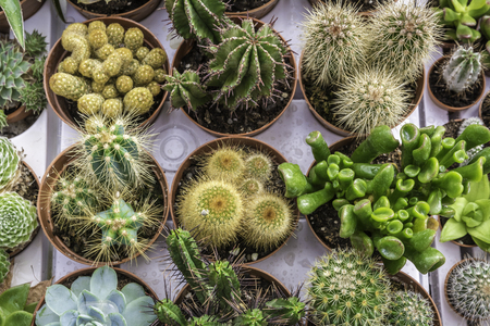 Assortment of varied succulent plants, cactuses. Modern fashionable pattern texture, exotic spiny background