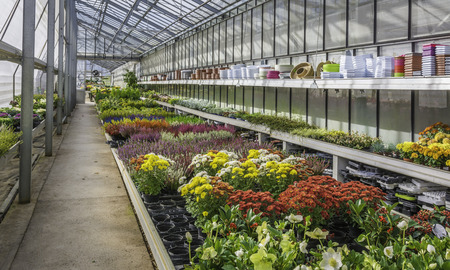 interior of an large greenhouse with blossoming seasonal flowers and plants nursery. Flowers and plants for sale. Trento, northern Italy, Europe Imagens