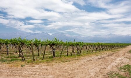 Beautiful rural landscape with vineyard and mountains in Uco Valley, Mendoza. Argentina. Uco Valley is a young wine region near to the capital of Mendoza, the area proves high-altitude winemaking yiel