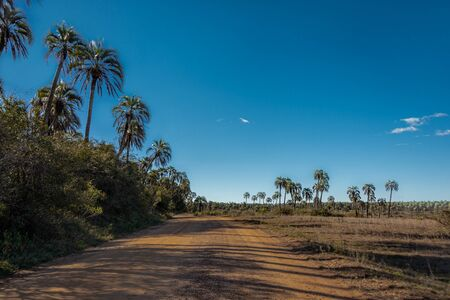 Landscape of El Palmar National Park in Argentina with road and native palm trees