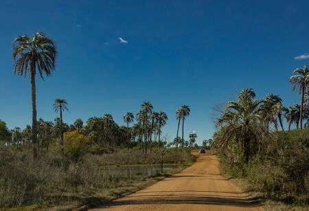 Landscape of El Palmar National Park in Argentina with road, native palm trees and car in the background Stok Fotoğraf