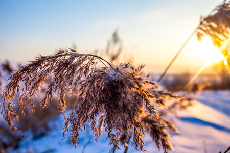 Frosty grass at winter sunset. Stock Photo