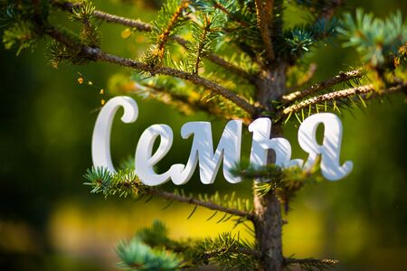 Russian language, the word Family of plastic on a background of greenery in the Park. Blue spruce. Cyrillic. 版權商用圖片