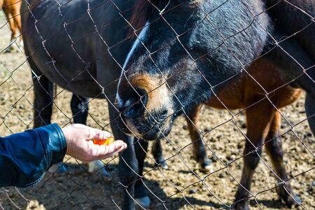 The horse looks through the trellis grid