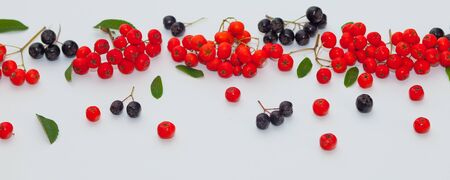 clusters and berries of red and black mountain ash on a white background Zdjęcie Seryjne