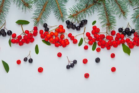 Branches of blue spruce with berries of red and black mountain ash on a white background Zdjęcie Seryjne