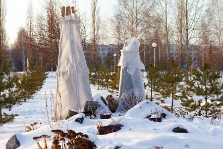 trees in a park covered with special cloth sheets to protect them from frost
