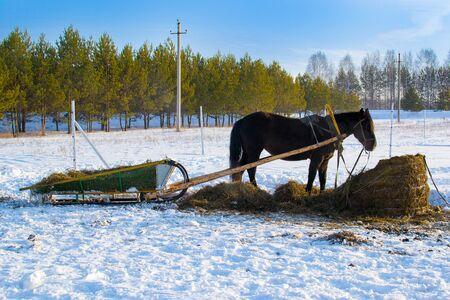 Horse pulling sleigh in winter . Old winter transport. Sunset Stockfoto