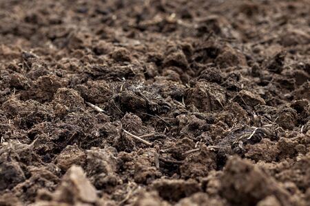 The earth is fertilized with humus, fertilizers for the soil-humus. Stock Photo