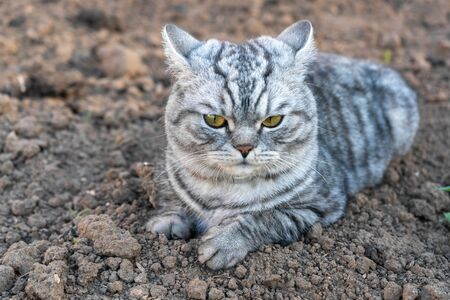 a grey furry cat with a serious look is sitting on the ground