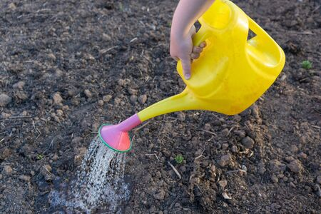 hand holding a yellow watering can and watering the garden
