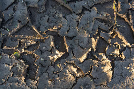 Dried mud after rain, cracks in the ground