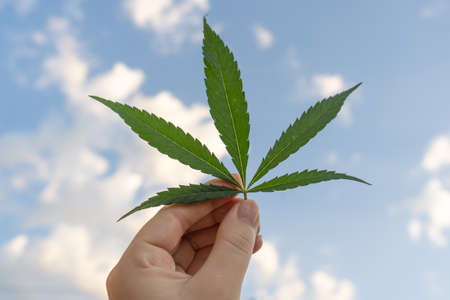 A cannabis leaf against a blue sky with clouds