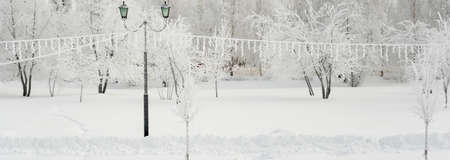 Winter city park in Russia. Trees covered with hoarfrost, severe frosts Stock fotó