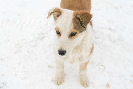 An abandoned puppy stands with its paws in the snow. Portrait of a mongrel puppy