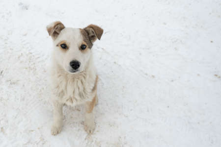 Cute puppy looking at the camera stands on the snow