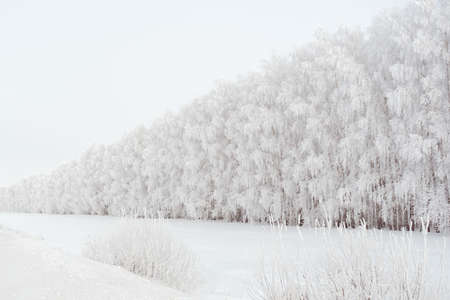 Winter landscape, trees covered with frozen frost Stock fotó