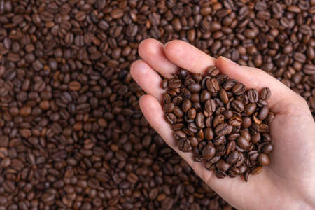 Freshly roasted coffee beans in a female palm