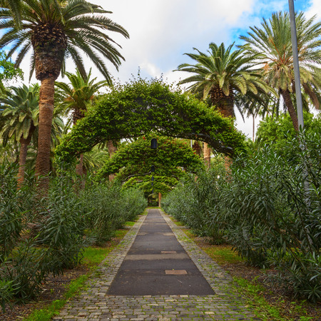 santa cruz: santa cruz garden in the island of tenerife
