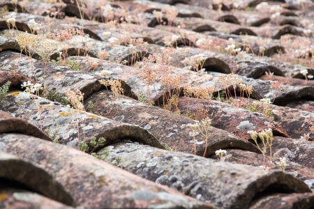 grew: Old Italian tile roofs with flowers grew on it Stock Photo