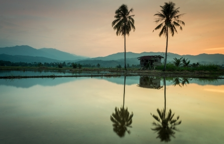 A farmer s hut and a reflection of a coconut tree Editorial