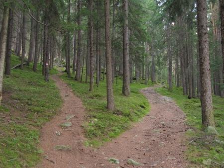 cruce de caminos: Un solo camino se divide en dos direcciones diferentes