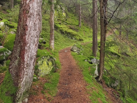 Inside an alpine forest, in a rainy day. Stock Photo - 13128226