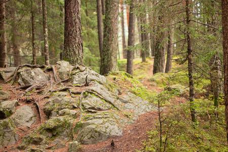 undergrowth: Undergrowth Stock Photo