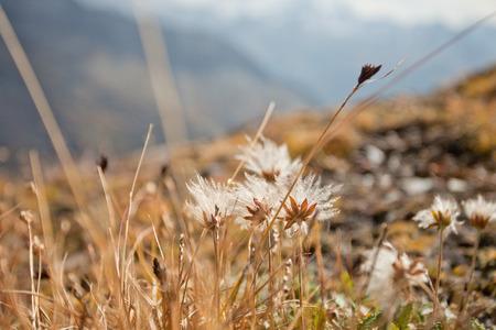 flora: Alpine flora