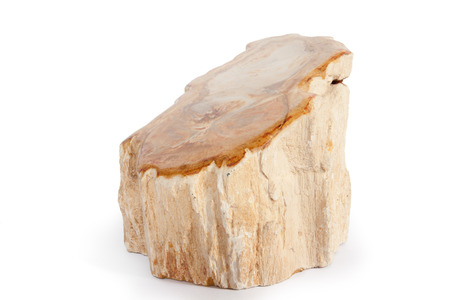 fossil: prehistoric wood fossil section Stock Photo
