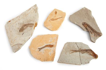 prehistoric fish: Six fishes fossils